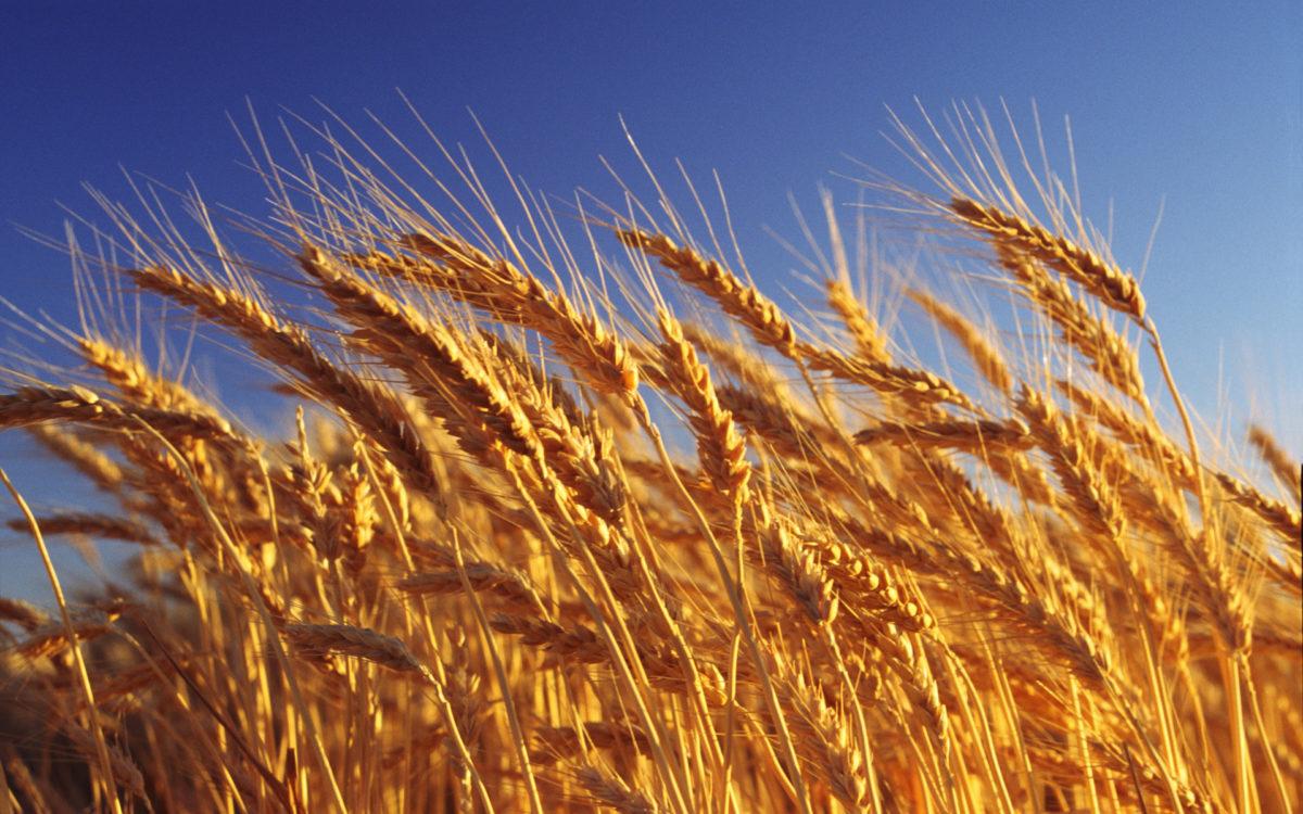 сельское хозяйство налоги
